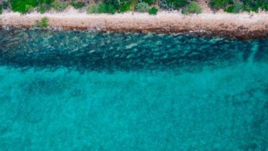 Photo of HAYMAN ISLAND BY INTERCONTINENTAL MAKES THE REEF A PRIORITY ON WORLD OCEAN DAY