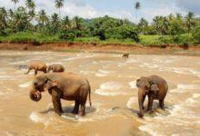 Photo of Spot Peacocks, Elephants and More on New Sri Lanka Wildlife Tour with Adventure Life.